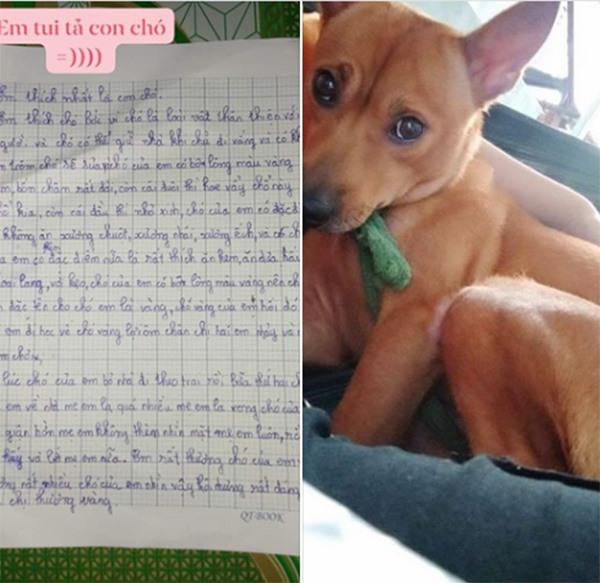 """[Tin] - Bài văn tả con chó """"bỏ nhà theo trai"""" của bé tiểu học sốt MXH"""